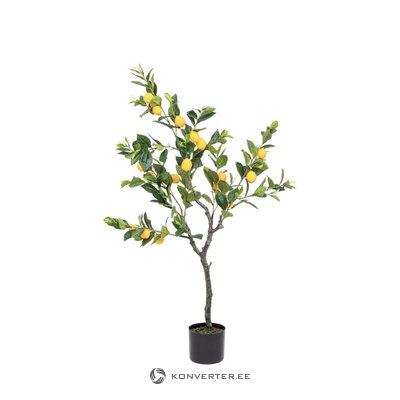 Field artificial plant dougan (bizzotto)